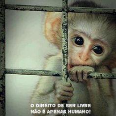 Respeite os animais.