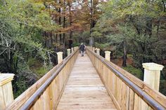 Situated 12' off the ground, the 1,700' boardwalk takes you directly through the ancient forest, offering exceptional views of the trees, swamp, birds, and other wildlife. Bald Cypress Tree, Cypress Trees, Tupelo Mississippi, Ocean Springs, Antebellum Homes, Thing 1, Natural Wonders, Day Trips, Travel Usa