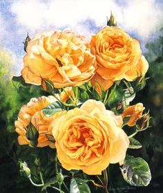 Flowers and Rose Paintings in oil and watercolor - Watercolor and Oil Painting - Roses, Birds, Still lifes, Figurative Paintings, Watercolor DVDs- Susan Harrison-Tustain Rose Oil Painting, Garden Painting, Rose Paintings, Floral Artwork, Art Floral, Watercolor Rose, Watercolor Artwork, Amazing Paintings, Rose Art