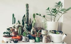 Love the concept, not too sure whether I find cacti appealing enough to re-create in my own house...