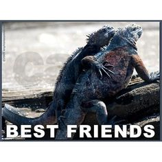 Goofy but fun - Best Friends Greeting Card on CafePress.com #animals #galapagos