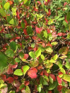 #осень #листва