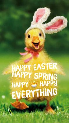 Happy Easter Happy Spring Happy Happy EVERYTHING!!!! Happy Everything, Easter Art, Happy Spring, Happy Easter, Good Morning, Haha, Humor, Funny, Backgrounds