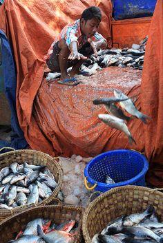 Myanmar unloading the fish