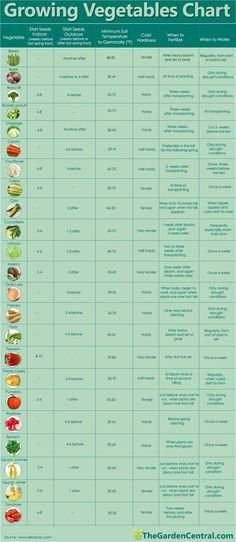 chart of vegetable planting