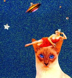 siamese cat, reclining woman, saucer soars by | amaxzinnnnggg