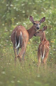 2 Serviettes en papier Bêtes à cornes bouquetin Paper Napkins Cervid Deer