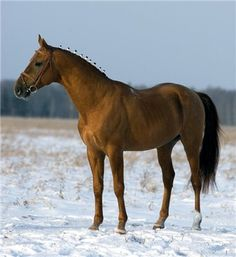 Don Horse - Russia