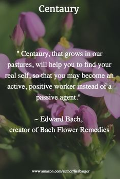 """ Centaury, that grows in our pastures, will help you to find your real self, so that you may become an active, positive worker instead of a passive agent.""   ~ Edward Bach,  creator of Bach Flower Remedies"