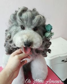 Grooming Dogs, Dog Grooming Styles, Poodle Hairstyles, Chinese Dog, Creative Grooming, Pets 3, Schnauzers, Poodles, Puppy Love