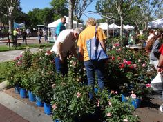 Browsing the plants at the festival