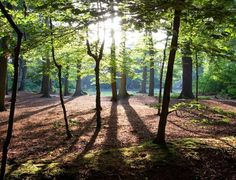 Wandelen in Brabant: 14 Prachtige Wandelroutes