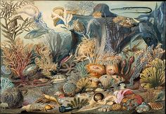 "indigodreams: "" Ocean Life Artist: James M. Sommerville Artist: Christian Schussele (American (born France), Guebwiller Merchantville, New Jersey) "" Art And Illustration, Illustrations, Antique Illustration, Botanical Illustration, Watercolor Illustration, Life Poster, World Environment Day, Wooden Jigsaw Puzzles, Oceans Of The World"