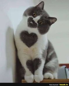 love - your daily dose of funny cats - cute kittens - pet memes - pets in clothes - kitty breeds - sweet animal pictures - perfect photos for cat moms Baby Animals Super Cute, Cute Baby Dogs, Cute Little Animals, Cute Funny Animals, Baby Cats, Funny Cats, Baby Farm Animals, Pretty Animals, Baby Animals Pictures