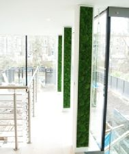 Moss vertical garden on balcony