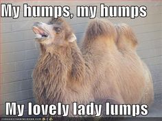 hump day camel images | Happy Hump-asana Day: Camel Pose / Ustrasana | Vogue Yogini