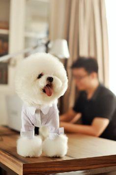 pet dog clothing - small stripe long sleeve shirt white-collar sven - by sunshinepet1, $23.00