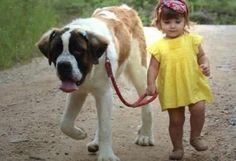 San Bernardo, el perro ideal para la familia - Animal Care