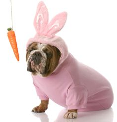 We'd hate to dangle a carrot in front of your nose, but our prize for the Easter photo contest is pretty undeniably awesome: our love + internet points