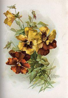 Opals yellow pansies - Catherine Klein