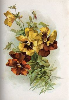 Opals yellow pansies - Catherine Klein