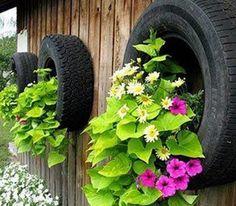 Pneus velhos além de jardineiras no chão podem muito bem serem fixados na parede e também acomodar plantas pendentes e até uma hortinha.