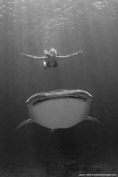 free diving with the sea's gentle giant, a whale sharkVisit Waverider @ http://www.waveridermp3.com/category/shop/mp3-brainwave-entrainment-isochronic-binaural-categories-addiction-to-feel-good-downloads/mp3-anxiety/ and conquer your fears and anxieties.  #anxiety #brainwaves #fears