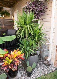 My tiny backyard updates this summer, including tons of small townhouse patio ideas, ideas for tropical plants to create privacy, and ideas for gardening in a small backyard. Yucca Plant Indoor, Yucca Plant Care, Small Backyard Gardens, Small Backyard Landscaping, Back Gardens, Backyard Ideas, Small Patio Ideas Townhouse, Lake Garden, Large Plants