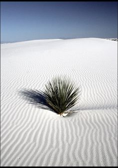 Gorgeous White Sands National Monument, New Mexico