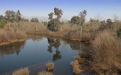 Lagoa de São Pedro d'Arcos