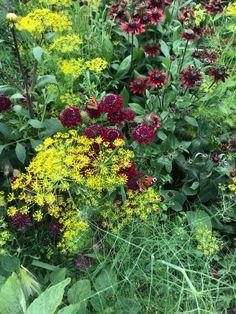 Garden, Flowers, Plants, Garten, Lawn And Garden, Flora, Gardening, Royal Icing Flowers, Outdoor