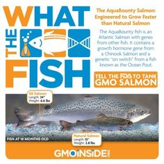 What the FISH?! Tell the FDA to Tank GMO Salmon! Act Now Here: http://action.greenamerica.org/p/dia/action/public/?action_KEY=10106