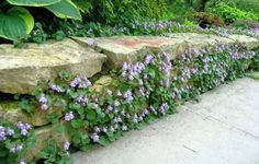 natural stone fence with climbing plant