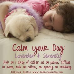 """""""Calm your Dog: Lavender & Serenity Rub on 1 drop of either oil on paws, diffuse in room, rub on collar, or spray on bedding. Dog Calming Essential Oils, Valor Essential Oil, Essential Oils Room Spray, Essential Oils Dogs, Calming Oils, Essential Oil Blends, Dog Calming Spray, Lavendar Oil, Doterra Serenity"""