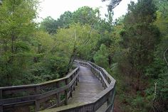 Boardwalk - Kiptopeke State Park - Northampton County - Virginia... not to far as it turns out