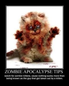 Watch for zombie kittens because nothing sucks worse than being known as the guy who got taken out by a kitten. Zombie Apocolypse, Apocalypse, Funny Cats, Funny Animals, Cute Animals, Resident Evil, Dungeons And Dragons, Zombie Attack, Fete Halloween