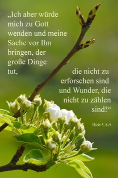 Ich aber würde mich zu Gott wenden und meine Sache vor Ihn bringen, der große Dinge tut, ... Hiob 5, 8-9