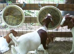 hanging hay feeder - less waste, less contamination