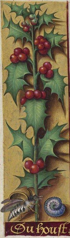 Manuscript illuminator Jean Bourdichon (1457-59-1521), 1503-08, Grandes Heures d'Anne de Bretagne, France. #Holly_Leaves