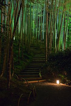 Bamboo Forest, Kodai-ji Temple, Kyoto, Japan
