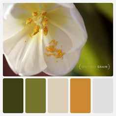 color palette  {animate grain}