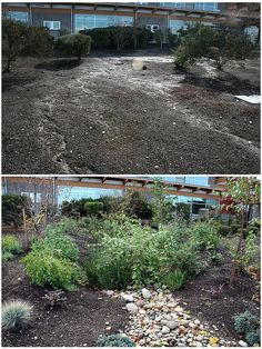 5 Lakewood City Hall Before/After Rain Garden, Stepping Stones, Explore, City, Outdoor Decor, Plants, Photos, Home Decor, Stair Risers