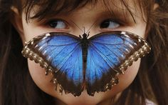 Girl with a Blue Morpho butterfly on her face at the Sensational Butterflies Exhibition at the Natural History Museum. Picture by Reuters via telegraph.co.uk #Butterfly