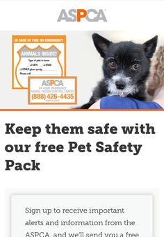 Take your pet safe with a free pet safety sticker pack from the ASPCA Pet Sitting Business, Pet Safe, Dog Walking, Animal Rescue, Dog Lovers, Safety, Packing, Stickers, Pets