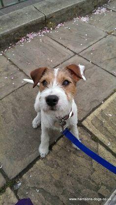 Dog walking services Www.harrisons-dogs.co.UK  #balham #Clapham #Tooting  #dogwalking #dogwalker #Wandsworth local dog walker