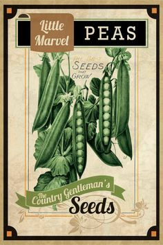 Seed Packet Peas Painting Print on Wrapped Canvas