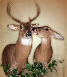This is the only way I want to see deer: mounted on someone else's wall.