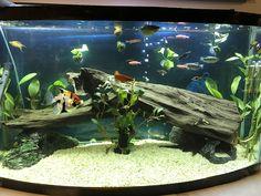 Freshwater aquarium #TropicalFishAquariumIdeas #TropicalFishFreshwater