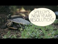 Speedy's New Year Resolutions