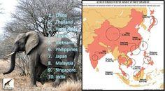 Ban ivory trade